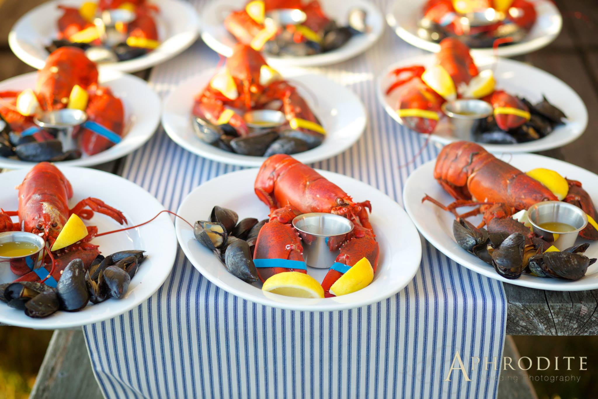 plated maine lobster dinner, maine lobster, Private residence wedding, blue hill wedding, Castine wedding, Maine wedding